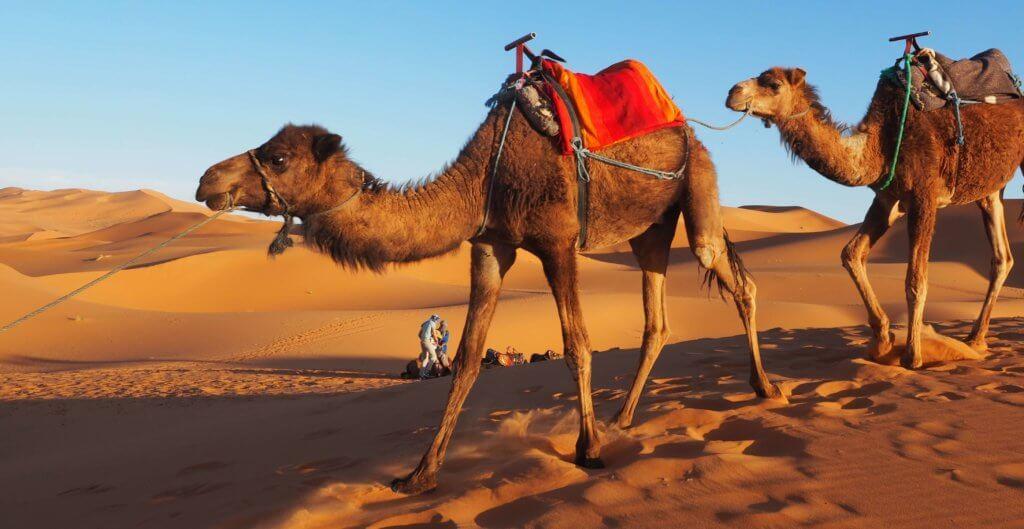 Circuit maroc de fès à marrakech